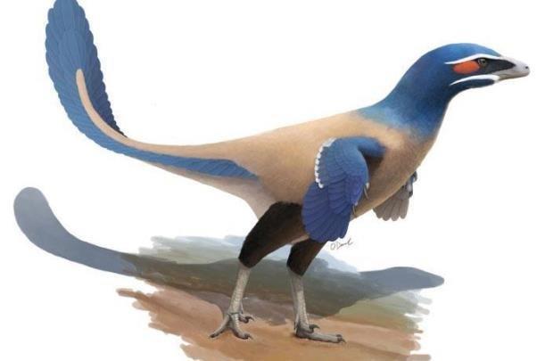 فسیل 71 میلیون ساله پرنده ای هم اندازه انسان کشف شد